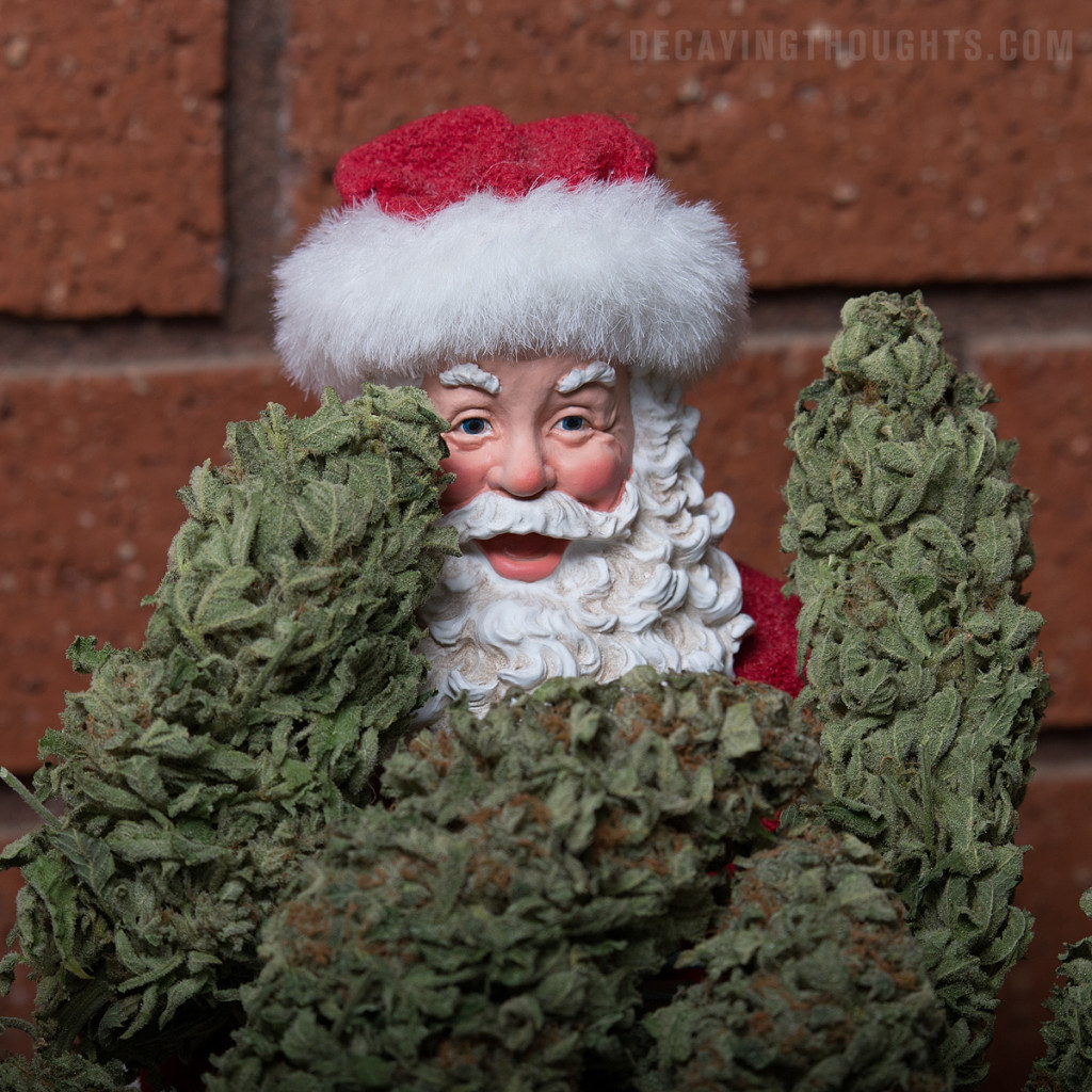 Santa hiding behind huge cannabis buds